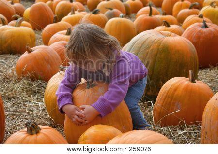 Harvest 7006