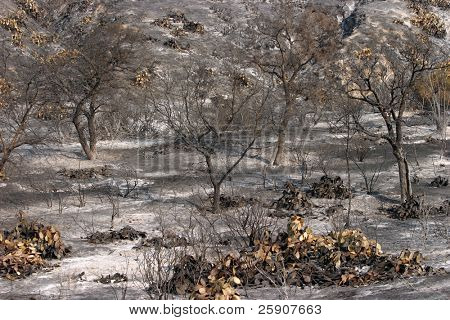 the devastating effects of Wild Fires