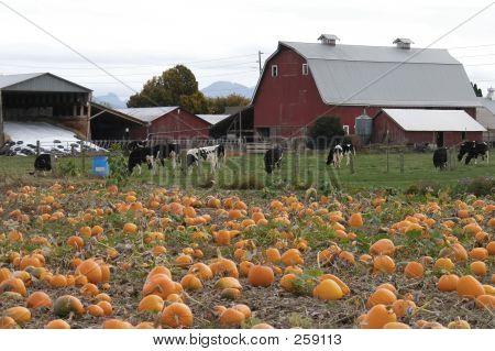 Harvest 7078