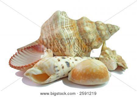 A Sea Shells