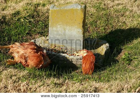 evidence of the religion known as Santeria, with a sacraficed chicken in a grave yard