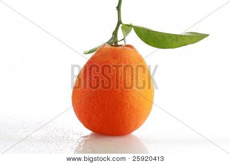 Fresh Picked Tangerine on white with reflections