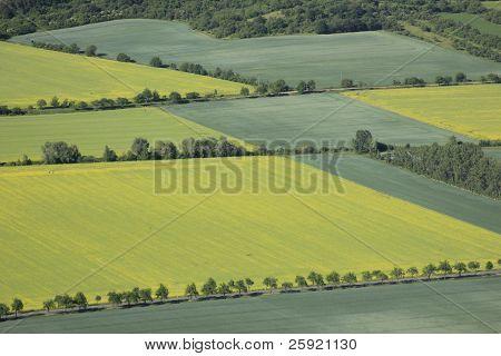 Flowering Rape Fields