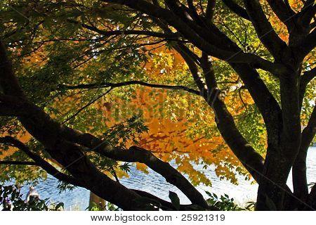 Autumn,Seattle's Lake Washington Blvd. #1