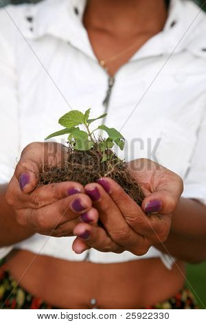 close up of a  plant in a womans hands for environmental concepts