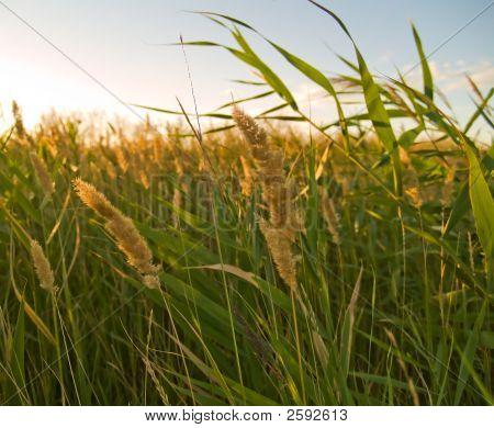 Green Grass Illuminated By Sunlight Close-Up