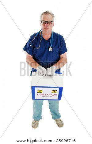 a doctor, or cardiac surgeon, or nurse, or emt, holds and delivers an ice chest with a Human Heart for transplant, being preserved on ice while in transit. isolated on white with room for your text