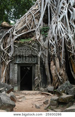 Overgrown ruins of Ta Prohm Temple in the Angkor Area near Siem Reap, Cambodia.