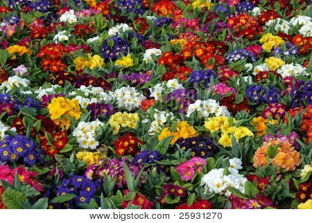Multicolored flowers bed