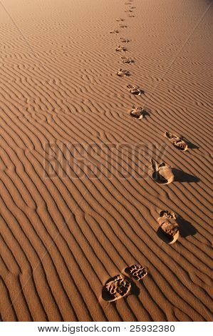 Human footsteps in the sand in the Sahara Desert, Morocco