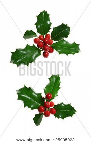 Two sprigs of European holly (Ilex aquifolium) isolated on white
