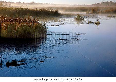 Constance Creek, mit Reiher