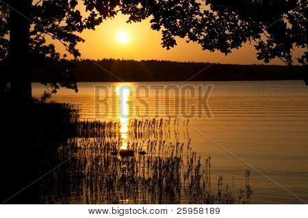 Sunset over a peaceful lake under a branch of an oak tree