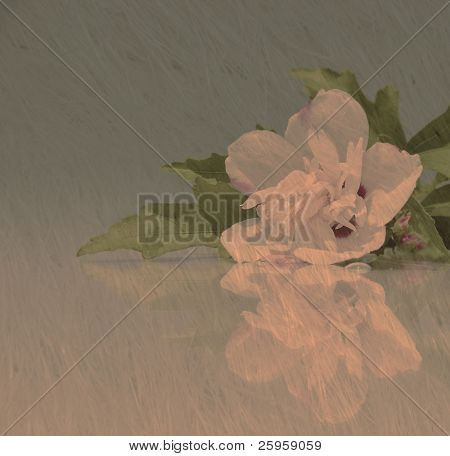 Abstract image of a white Althea flower with reflection, in muted colors on textured background with copy space