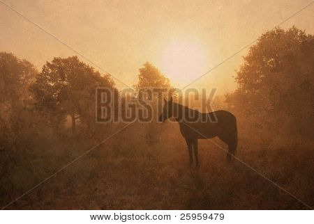 Silhouette of a sleeping Arabian horse against sunrise in rich sepia tone, a textured antique image