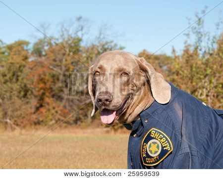 Funny image of a dog wearing a uniform -  Crook County Sheriff