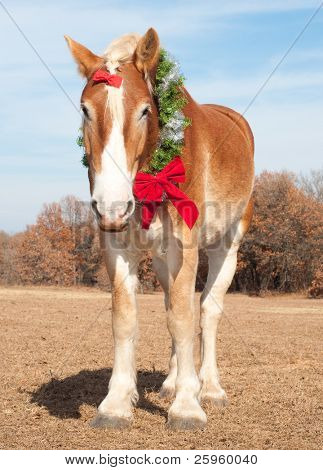 Handsome Belgian Draft horse wearing a Christmas wreath and a red bow on his forelock