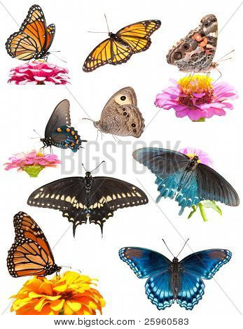 Collage of bright, colorful butterflies on white