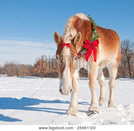 Handsome Belgian Draft horse wearing a Christmas wreath and a bow looking at the viewer down low, against snowy winter background