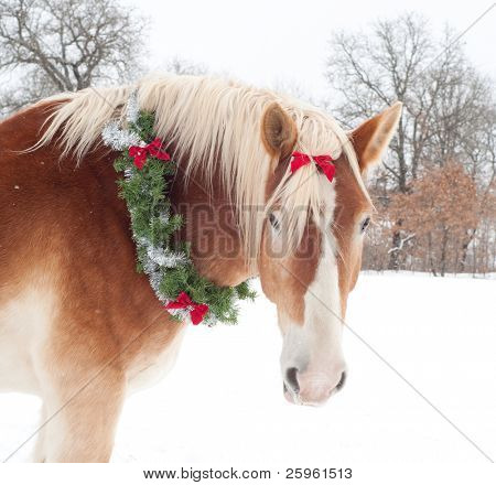 Gift horse - a Belgian draft horse with a Christmas wreath and a bow in his forelock against snowy winter background