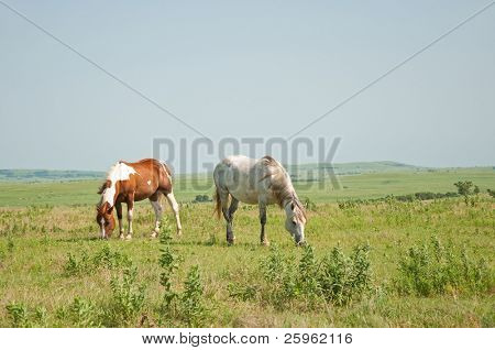 Two horses grazing against wide open prairie background