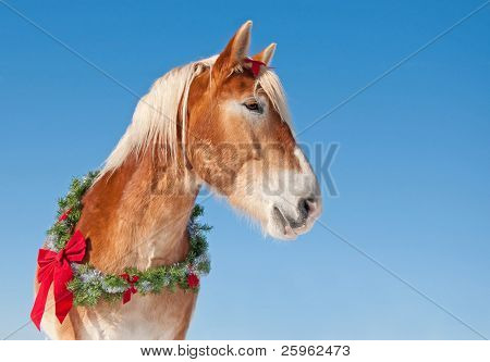 Draft horse wearing a Christmas wreath against clear blue winter sky
