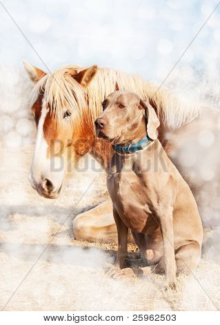 Dreamy image of a Weimaraner dog sitting next to his resting friend, a huge Belgian Draft horse