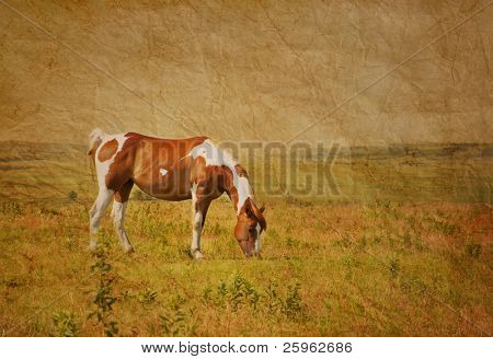 Antique textured image of a paint horse grazing in pasture against wide open prairie background in sepia tone
