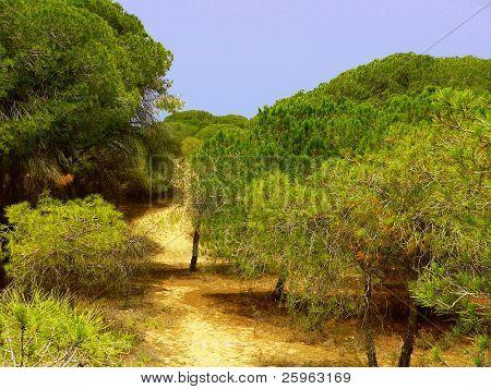 Pinos en la playa (España, Mediterráneo)