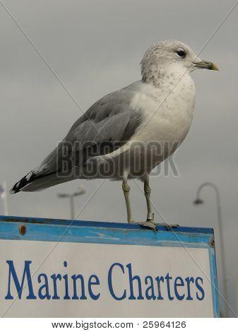 Marine Charters by seagul in Helsinky, Finland.