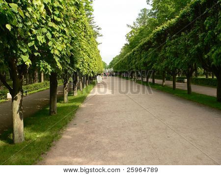 Avenue in Peterhof, St.Petersburg, Russia