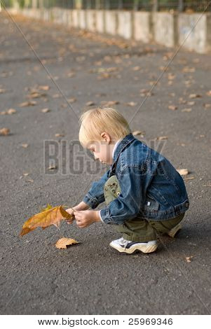 The little boy collects leaves. Autumn