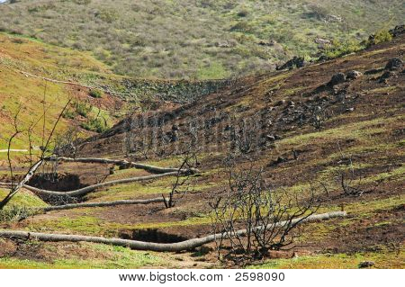 Charred Hillside