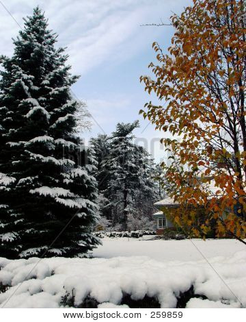 Fall Foliage With Snow
