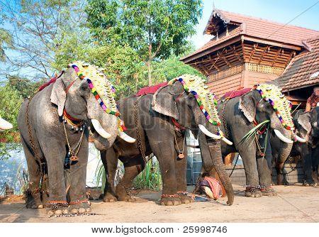 COCHIN, INDIA - FEBRUARY 3 : Gold caparisoned elephants for parade at the annual festival in Siva Temple, February 3. 2009. Cochin, Kerala,  India.