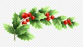 Christmas Holly Branch Realistic Illustration. Crescent Twig With Green Leaves And Red Berries On Tr poster