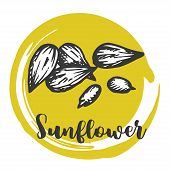 Sunflower Seed Vintage Hand Drawing Of Seeds Vector Illustration Retro Design poster