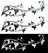 Vector Grape Rambling Vine With Grape Berries, Leaves. Grape Vine Of Violet And Green Colors, Isolat poster