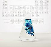 a chemist or medical research scientist adds chemicals to a erlenmeyer flask  for a violent chemical
