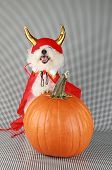picture of she devil  - Fifi the Purebred Bichon Frise smiles as she modesl in her DEVIL DOG costume with her pumpkin against a black and white background - JPG