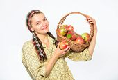 Woman Sincere Villager Carry Basket With Natural Fruits. Woman Gardener Rustic Style Hold Basket Wit poster
