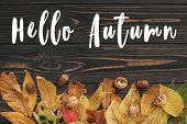 Hello Autumn Text. Hello Fall Sign On Bright Colorful Autumn Leaves With Acorns And Nuts On Rustic W poster