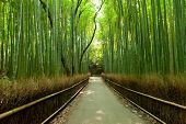 stock photo of bamboo  - Famous bamboo grove at Arashiyama - JPG