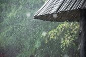 The Rainy Season In The Tropics With Rain Droplets. The Rain Drops From The Roof Of Bamboo poster