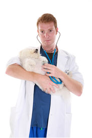 foto of bichon frise dog  - a veterinarian gives a poor sick little Bichon Frise a check up - JPG