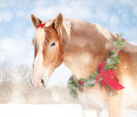 stock photo of gentle giant  - Sweet Christmas themed image of a Belgian draft horse with a wreath and bow - JPG