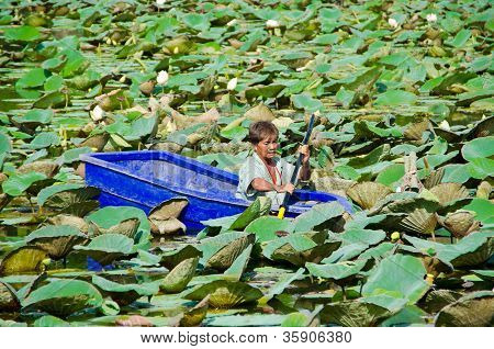 A Man Is Stucking In The Middle Of Lotus Pond