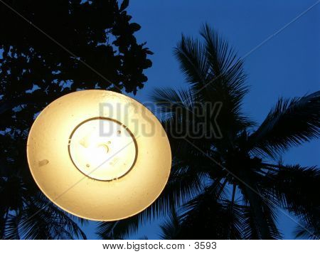 Lamp Against Palm Tree Sky