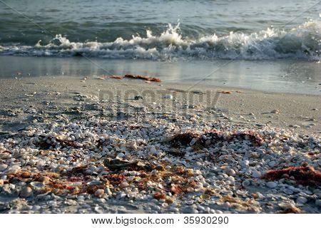 Ocean Waves and Seashells