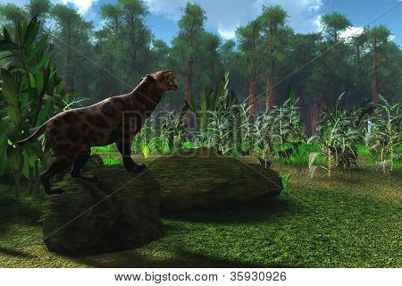 Saber-tooth Cat Age